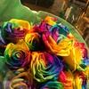30本の虹色のバラ (笑いなし)