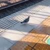 【日常】いつものように電車を待っていると、黄色い線の外側に・・・