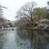 お花見サイクリング 桜三昧^^!パートⅥ 井の頭公園へ