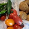 夏野菜がたくさん
