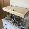 【DIY】60cmガラス水槽用の木製のフタ(小鳥飼育用)