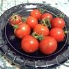 まるで果物!プレミアムフルティカトマト食べてみた。