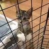 猫用の脱出防止フェンス作成と子猫風ちゃんピンチ事件。