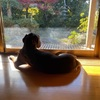 うちのポンコツ犬。#4