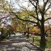 気持ちが前を向いてくれる夙川の散歩道