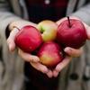 続・クリティカルシンキング。毒リンゴに君はツッコミを入れたか