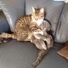 多くを語る必要はない。『可愛い』が伝わる愛猫たちの懐かしい仲睦ましい写真