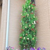 クリスマス仕様に変身(^^)