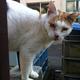 今日の黒猫モモ&白黒猫ナナの動画ー792