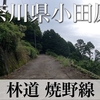 【動画】神奈川県小田原市 林道 焼野線