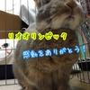 (●゚◇゚●)リオオリンピックの閉会式が日本らしくてよかった!日本人なら鳥肌モノだから見たほうがいいよ!