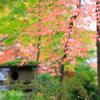 まさにモミジ王国!中野邸記念館は紅葉まっさかり!