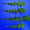 植物(ブルーバック) その5