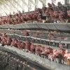 家畜は人間に利用されたり食べられるためだけに生きてるけど種の保存は保障されてる