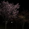 桜とクイーンエリザベス