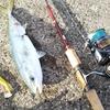 ワールドシャウラを使っていて思うこと / 海釣りで使うには何かが足りない