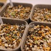 *【多肉植物とリトープス実生】最近の癒しは植物たち*