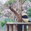桜の動物園