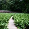 筑波実験植物園で撮って来たんです