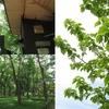 写真保存を兼ねたブログ 山野草展は楽し、神代植物公園 (1)