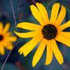いろんな花があるけど、この花も知ってもらいたい!