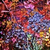 【五感の記憶-今日も色彩に魅せられる】