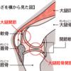 【解剖・生理学】膝関節の構造(半月板・靭帯)と特徴