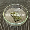 焼き海苔の顕微鏡写真