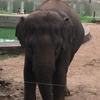 ハノイの動物園