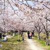 地元ひとり花見 ~2021春~
