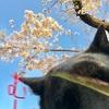 花より団子🍡〜コレガ春ッテモンヨ❤︎(о´∀`о)❤︎