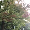 鎌倉の紅葉2019  今日の円覚寺  11月1日
