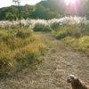 秋の狭山公園にて、ブルーシートを敷いて安納芋をどうぞ。