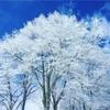 今日は樹氷が最高に綺麗だった。【白馬岩岳スノーフィールド】