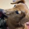 愛犬とのコミュニケーションに学ぶ、意思表示によるフラストレーションの軽減