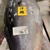 【沖縄県産・巨大魚】186キロの特大天然生本まぐろを買ってみた