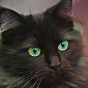 猫から見たK-POP