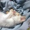 【移動しました】犬派の僕が猫と暮らす理由 Complete ③ ~1つの命をはぐくむこと(1/11~6/11)~