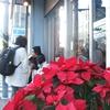 12月の赤い花