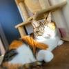 【愛猫日記】毎日アンヌさん#145
