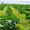 AGRITECHは未来の食糧危機を救えるか?