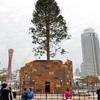 神戸港巨大ツリー 催事後伐採「生田神社鳥居に」