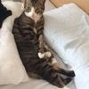 猫の変なポーズ写真その1