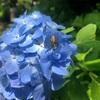 アジサイとバラが咲き乱れる京都府立植物園に行ってきた!〜晴れの日に安くで楽しめるオススメスポット!!〜