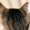 #481 春になって猫の換毛期!と忙しい夫に対する妻が取るべき行動で毎年悩む【猫】【日記】