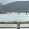 正月トレーニング/京都輪行
