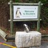 ケープタウンのペンギンたち