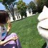 【日向坂46】まさかのアクシデントが…「ドレミソラシド」TYPE-A特典映像予告公開!!