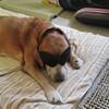 愛犬記録1