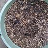 東京|全部プランター編/種をまいたから、芽がでました